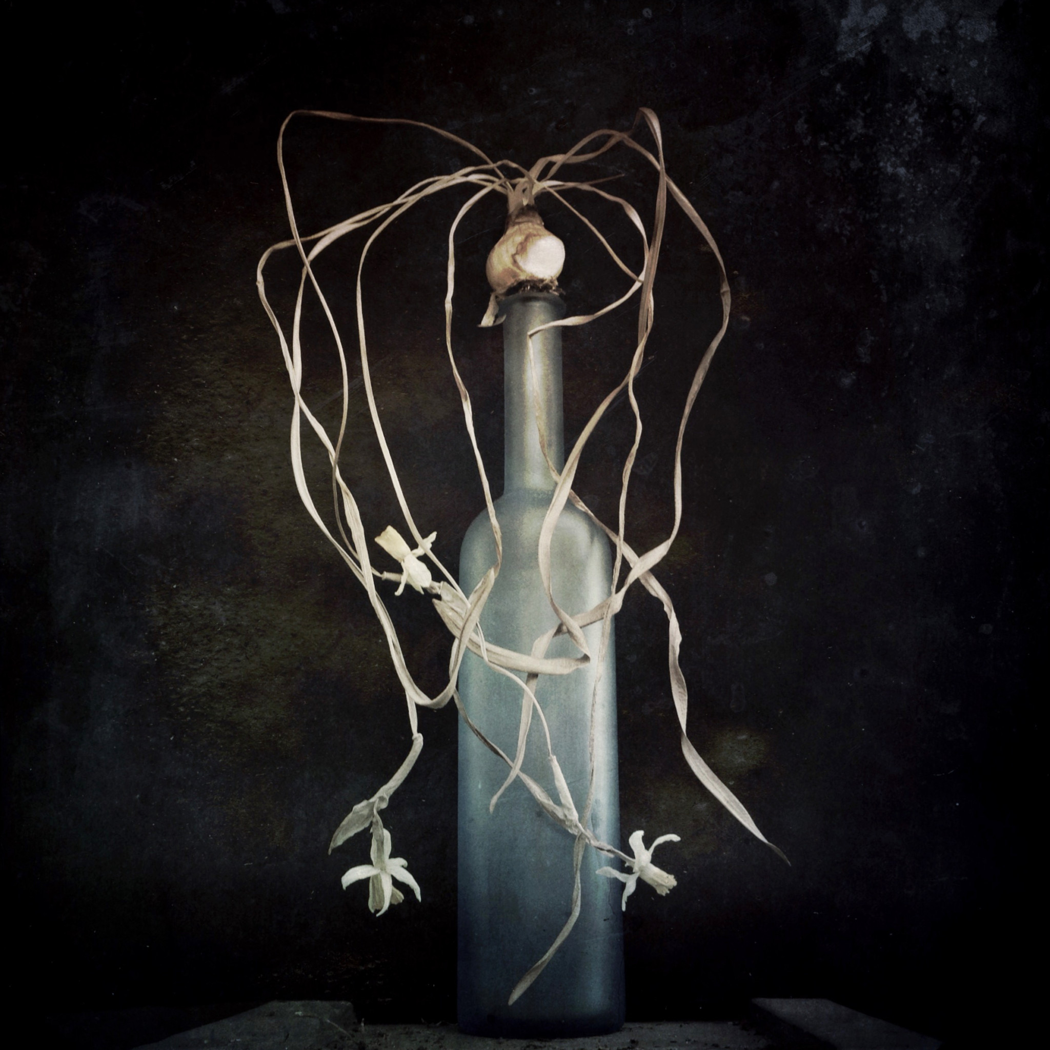 'Bulb and Bottle'